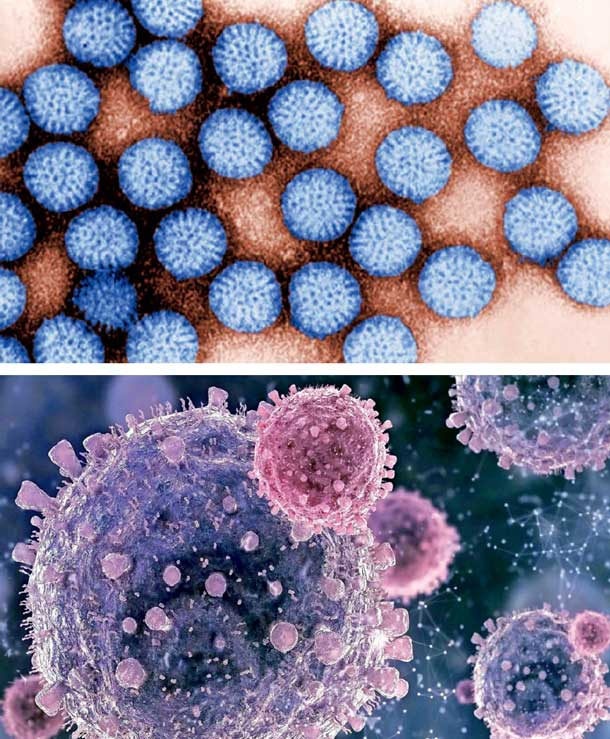 Viren unter dem Elektronenmikroskop
